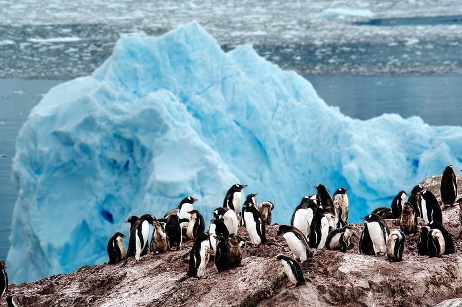 年纪阻碍不了想看世界的心 六旬南宁老人游南极