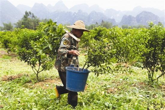 发展水果产业助力脱贫攻坚