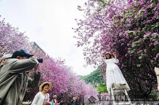 """紫荆花城庆""""壮族三月三"""" 柳州市喊你来过嘉年华(组图)"""