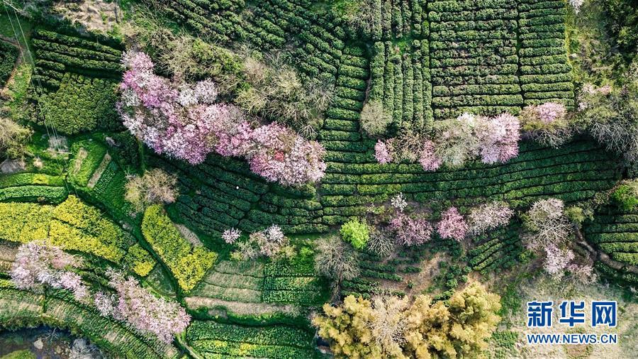 (春季美丽生态)(5)美丽乡村游 家门口增收