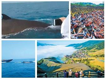3月31日焦点图:鲸鱼造访北海涠洲岛