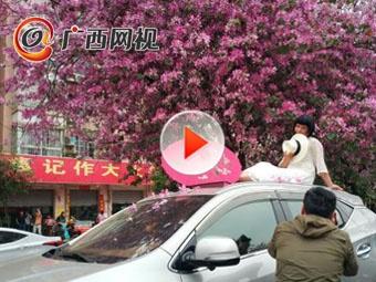 柳州这座城市赏花拍照姿势竟如此销魂!
