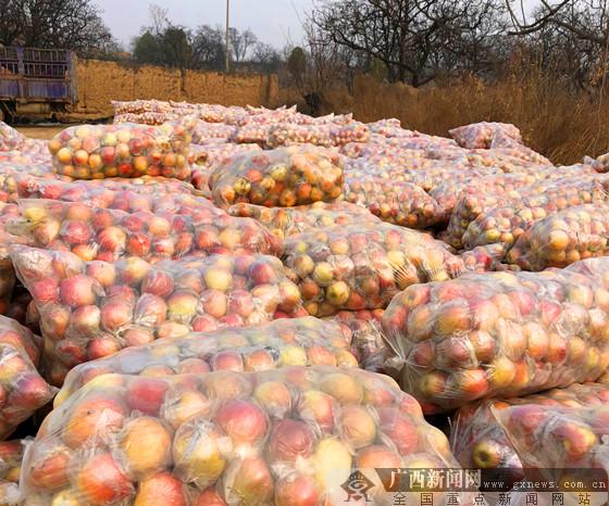 陕西种植户苹果求销路 广西爱心人士助农在行动