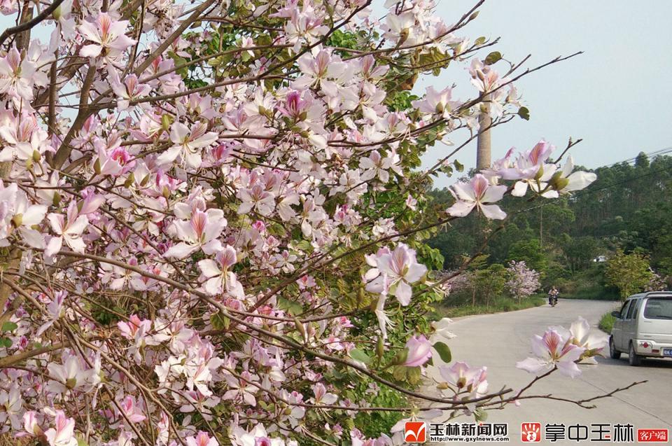 陆川:乡村美景入画来