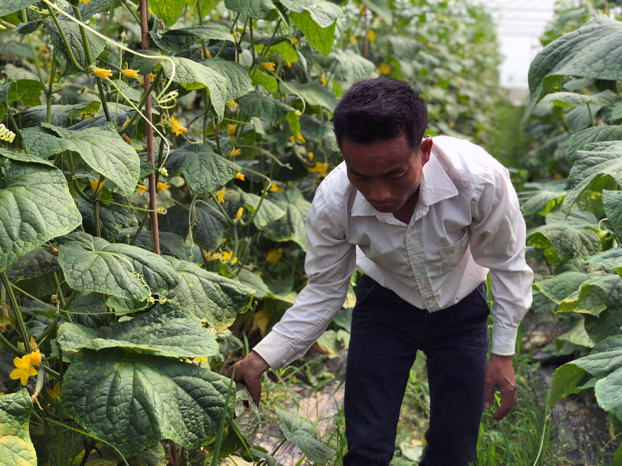 八步区:供港蔬菜基地助推生态种植业发展