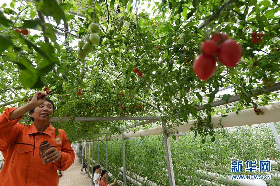 (经济)(1)江西樟树加快高标准农田建设步伐