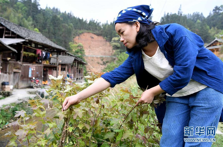 #(图片故事)(8)侗族大学生夫妻回村创业卖土布