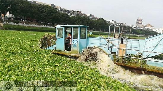玉林开展南流江水葫芦专项清理打捞行动