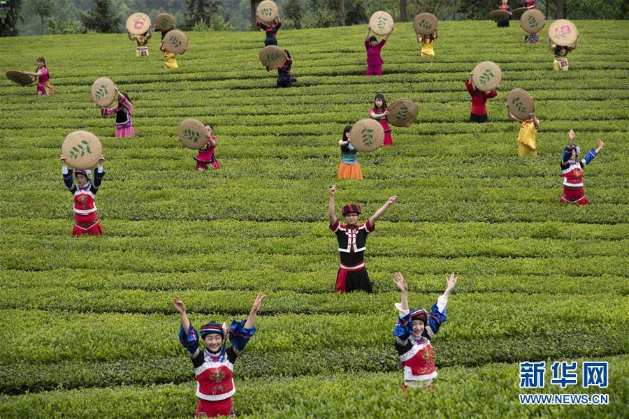(春季美丽生态)(5)湖北五峰:茶乡生态美
