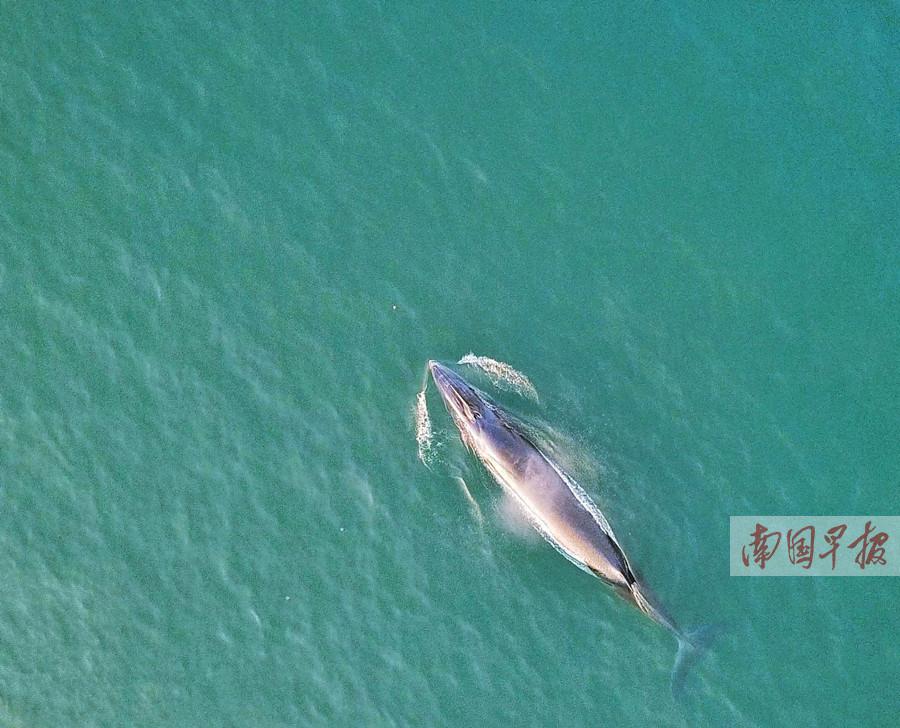 """4月27日焦点图:北海拟划定保护区打造""""鲸鱼之乡"""""""