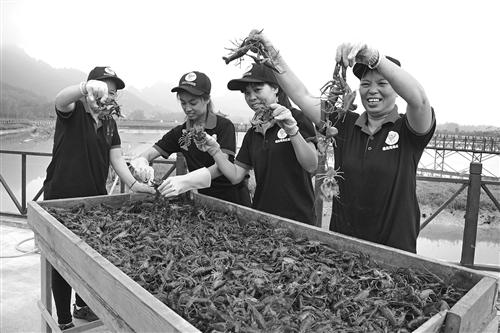 上林县:打造小龙虾品牌助力脱贫