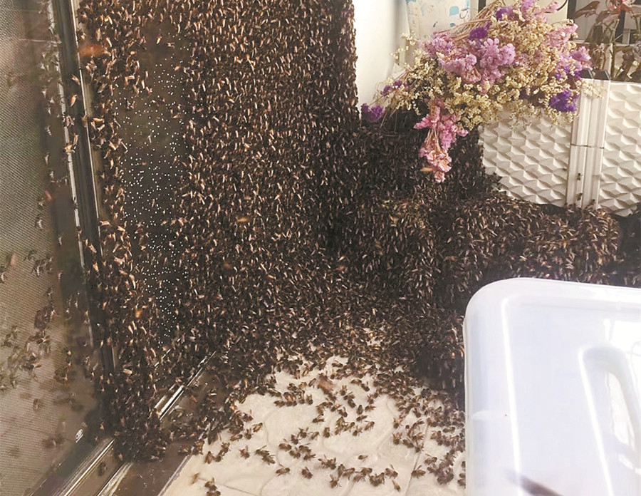 可怕!万只野蜜蜂飞到南宁一小区30楼阳台安家(图)