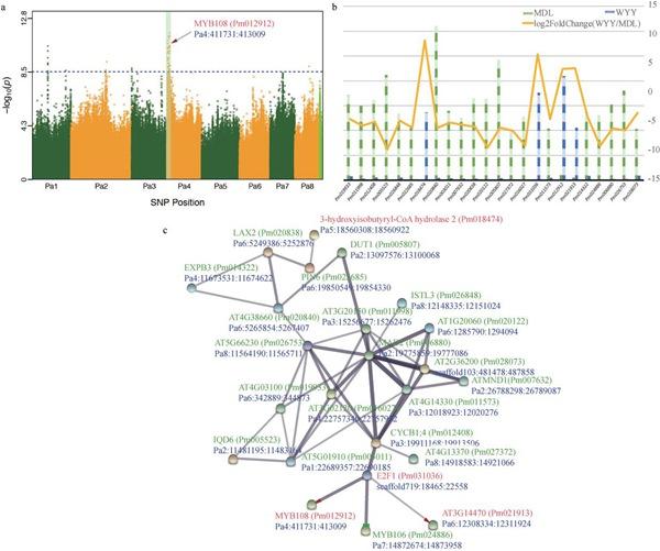 图2 梅花花瓣,花萼,柱头和花芽颜色的全基因组关联分析