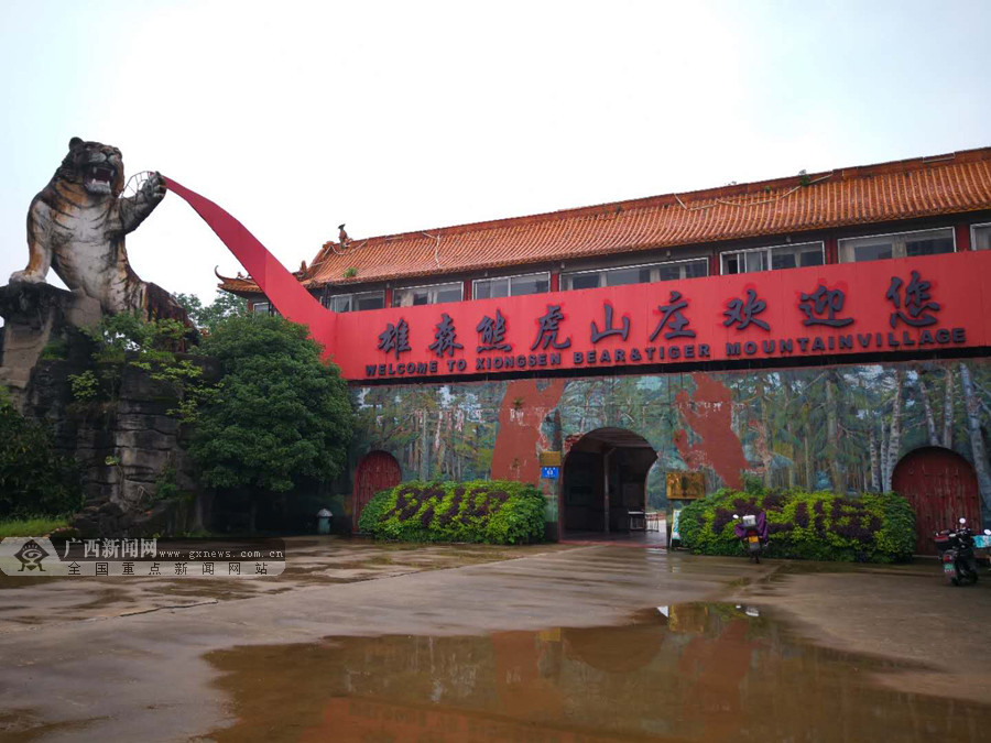 桂林一山庄发生老虎伤人事件续:山庄已有计划搬迁