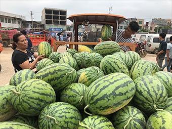 """记者走访西瓜市场发现:""""黑美人""""等收购价下降(图)"""