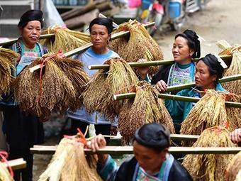 苗山脱贫影像志:乌英苗寨延续百年的喜宴风俗(图)