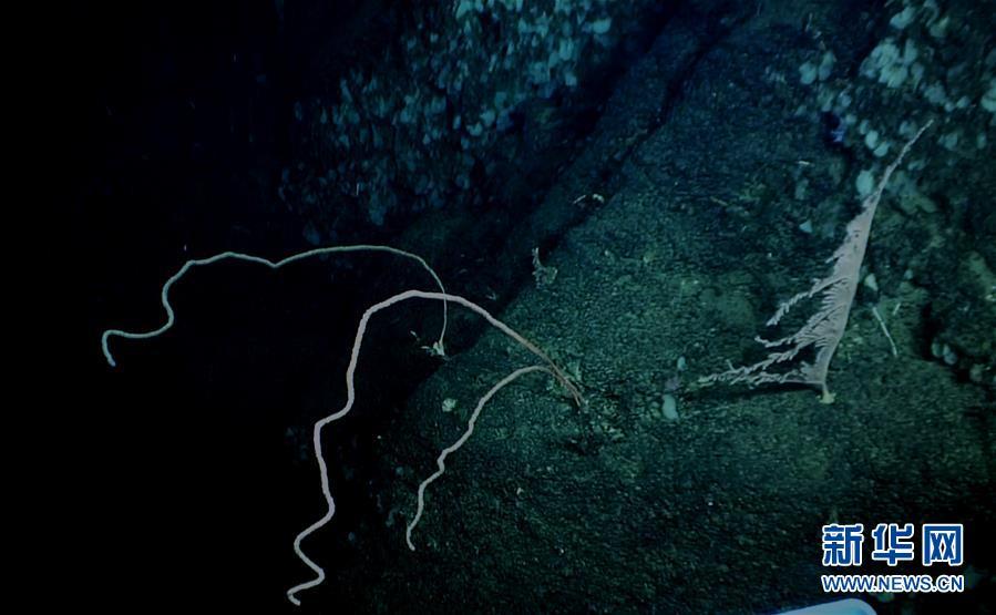 (图文互动)(7)我国科学家在南海甘泉海台首次发现冷水珊瑚群