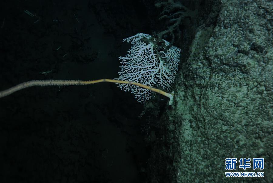 (图文互动)(8)我国科学家在南海甘泉海台首次发现冷水珊瑚群