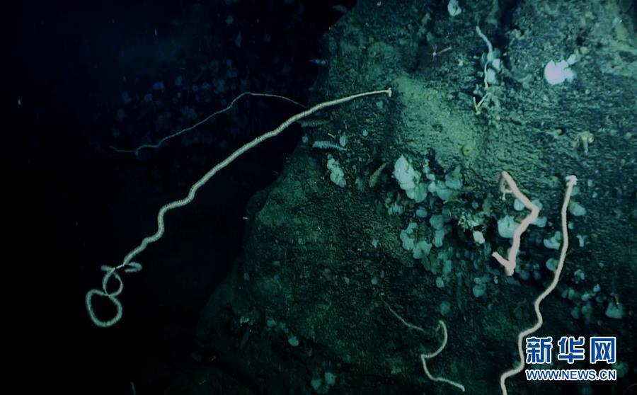 (图文互动)(3)我国科学家在南海甘泉海台首次发现冷水珊瑚群