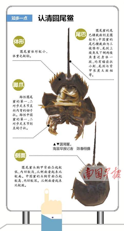 有剧毒!北海男子因吃圆尾鲎中毒已昏迷一周(图)
