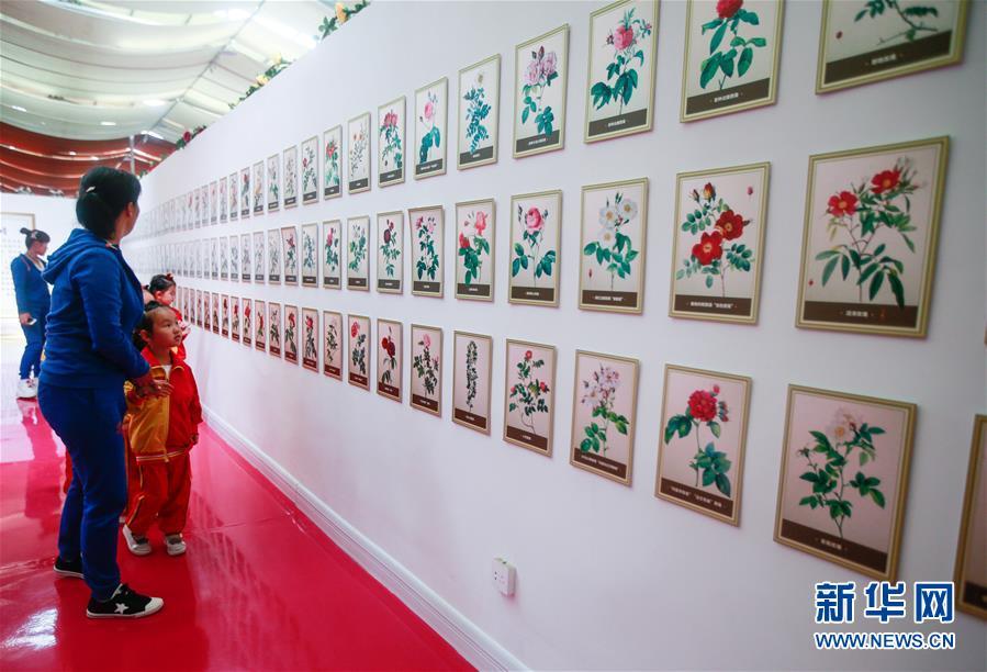 (经济)(7)山东淄博:玫瑰香溢乡村振兴路