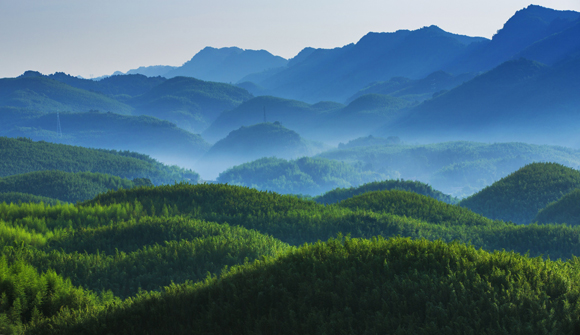 中国最大寿竹海百里竹海6月开园
