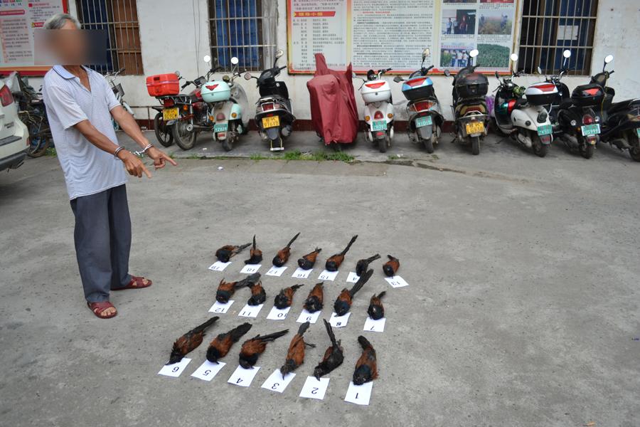 男子非法猎捕收售19只国家二级保护动物毛鸡被拘