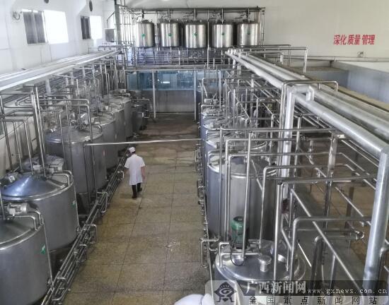 灵山奶水牛存栏4.63万头 奶农人均年收入超2万元