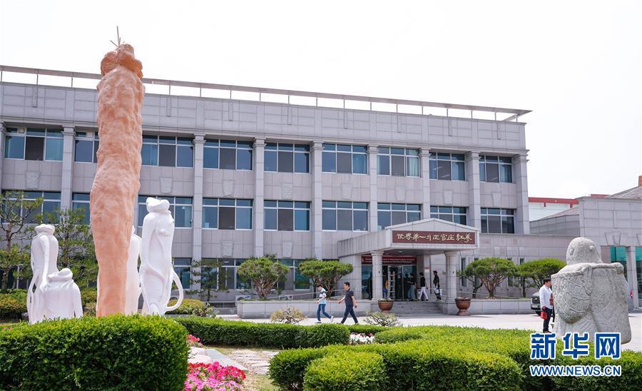 (国际)(5)探访韩国高丽参工厂