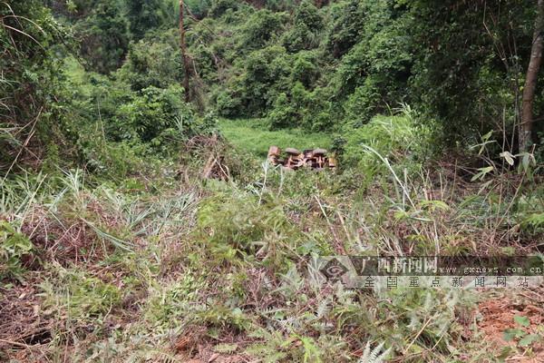 崇左:一铲车侧翻山下1人死亡 消防紧急救援(图)
