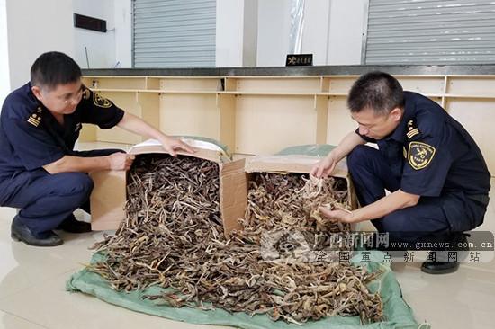 凭祥海关查获国家二级保护动物制品海马干约7750只