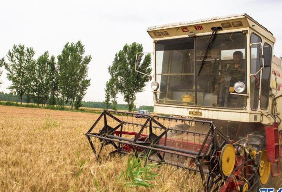 麦收时节收获忙