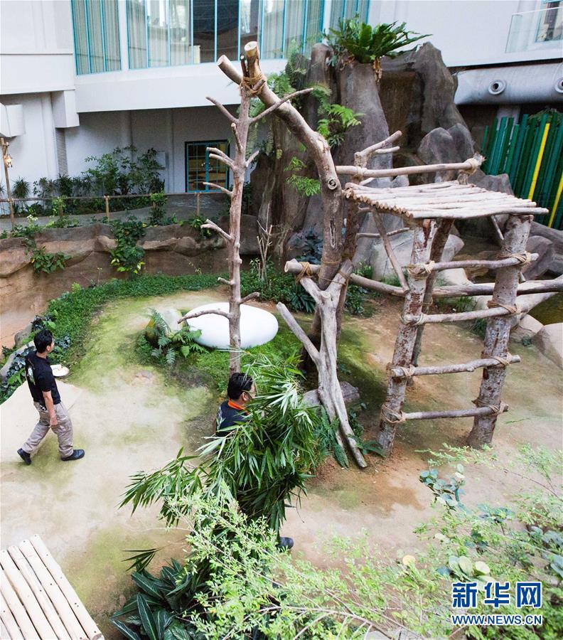 """(国际)(3)旅马大熊猫的马来西亚""""奶爸"""""""