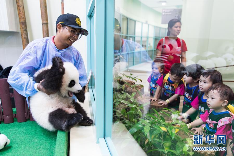 """(国际)(2)旅马大熊猫的马来西亚""""奶爸"""""""