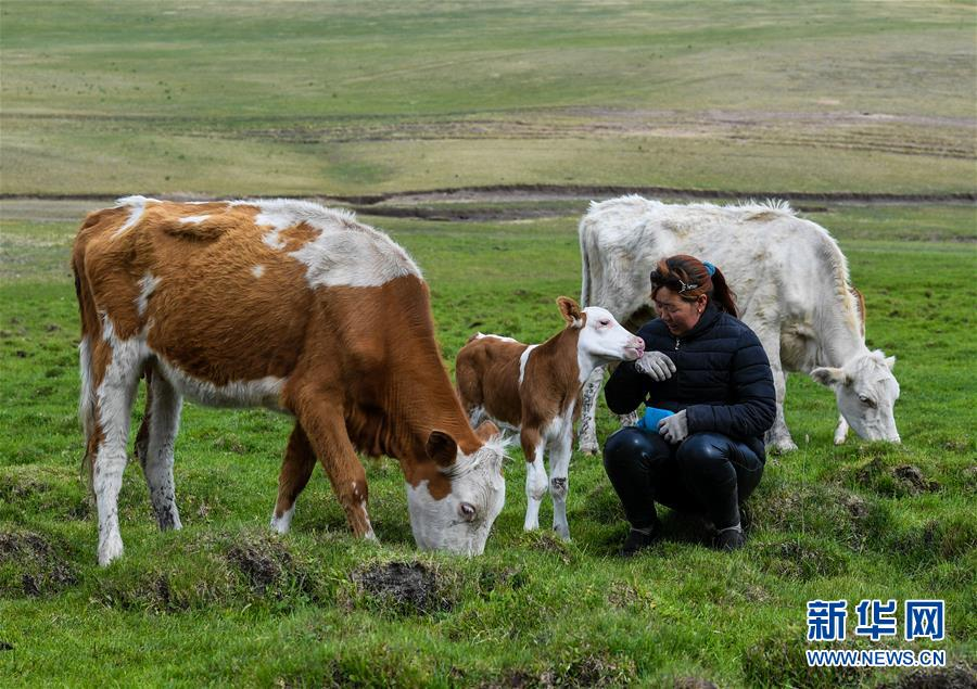 (图片故事)(17)阿鲁科尔沁草原上的游牧迁徙