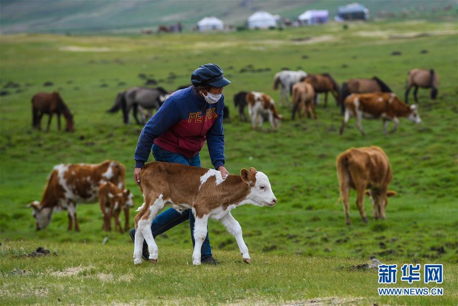 (图片故事)(13)阿鲁科尔沁草原上的游牧迁徙