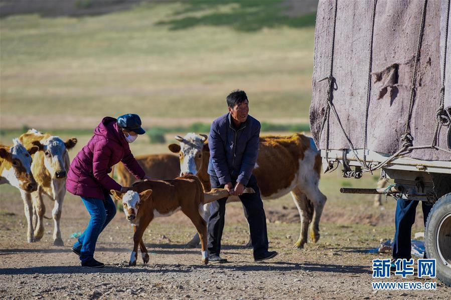 (图片故事)(7)阿鲁科尔沁草原上的游牧迁徙