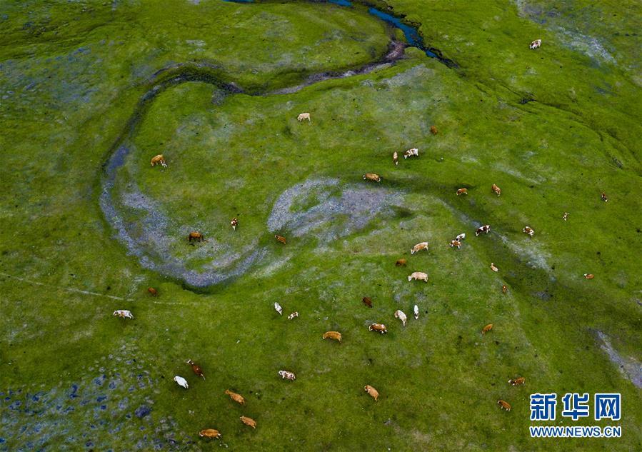 (图片故事)(20)阿鲁科尔沁草原上的游牧迁徙