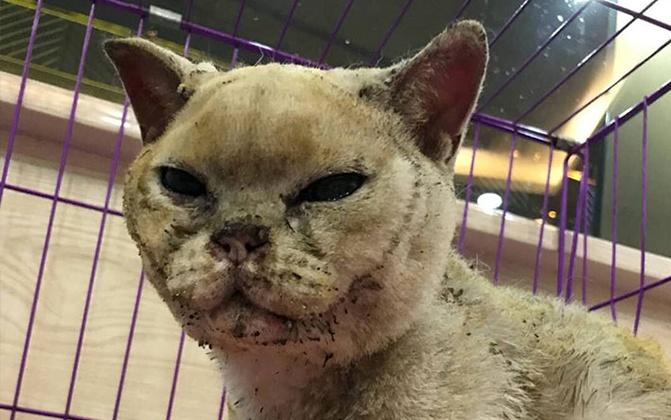 17日焦点图:主人已逝 猫咪守候不离弃