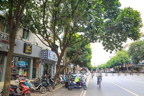 南宁街边菠萝蜜树硕果累累 提醒吃货们要忍住(图)