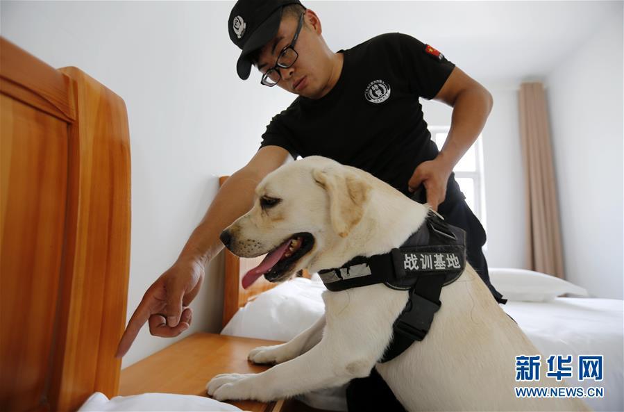 #(社会)(1)山东沂南:缉毒犬亮身手