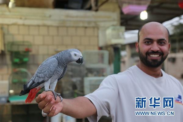 手机北京赛车直播开奖:科威特宠物市场――沙漠里的宠物天地(组图)