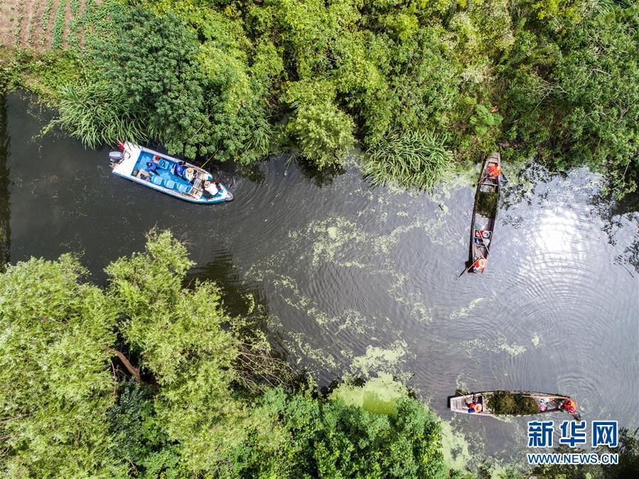 (社会)(1)夏季乡村河道清理忙