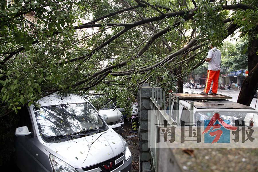 柳州市多地现6级以上强风 狂风掀翻泳池钢架棚(图)