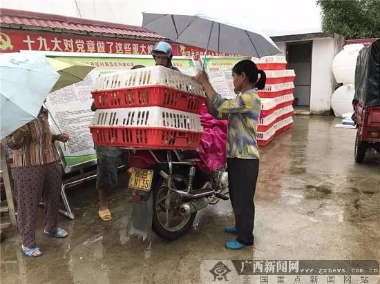 柳州市鱼峰区:扶贫送鸡苗 情暖贫困户