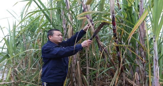 勇立潮头敢为先——记南宁糖业香山糖厂广西劳动模范黄耿维