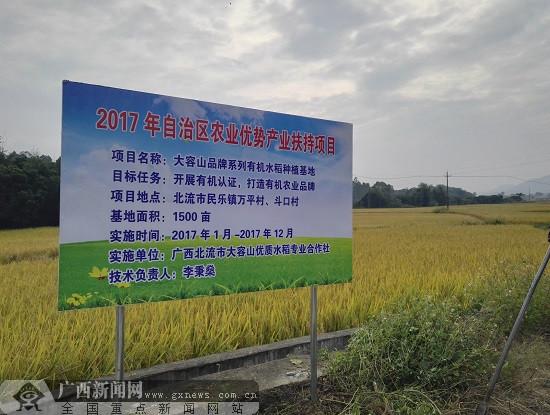 北流企业开展产业扶贫 引导农户种植有机稻