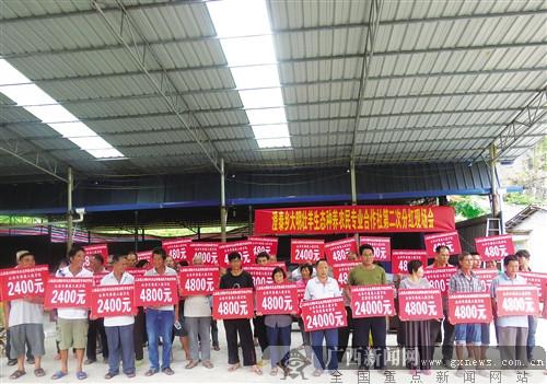 上林县:澄泰乡合作社农户喜领分红