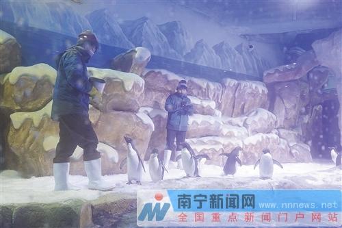 昨日下午,南宁融晟极地海洋世界在南宁市沙井大道39号举行了媒体发布