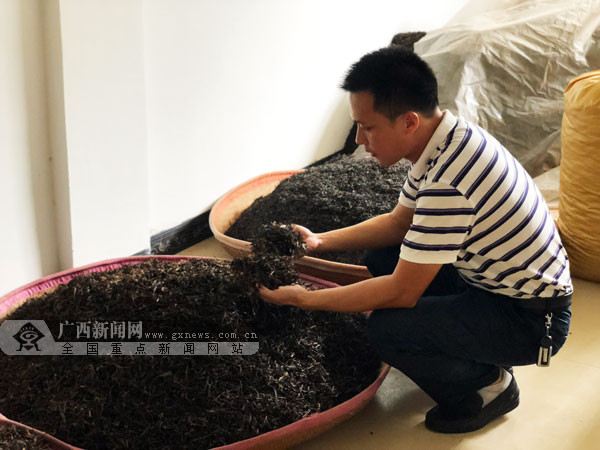 梧州市长洲区借力茶产业助推乡村振兴